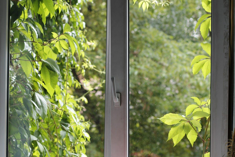 Brunk Fenstern 2